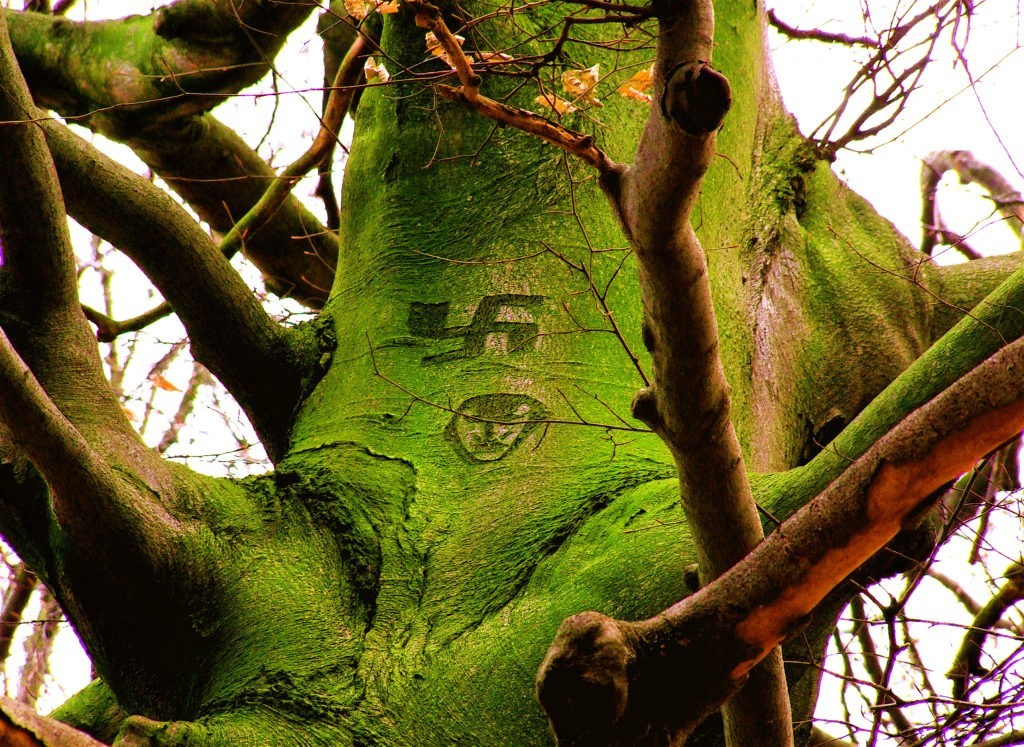 A huge tree with a swastika symbol painted on it